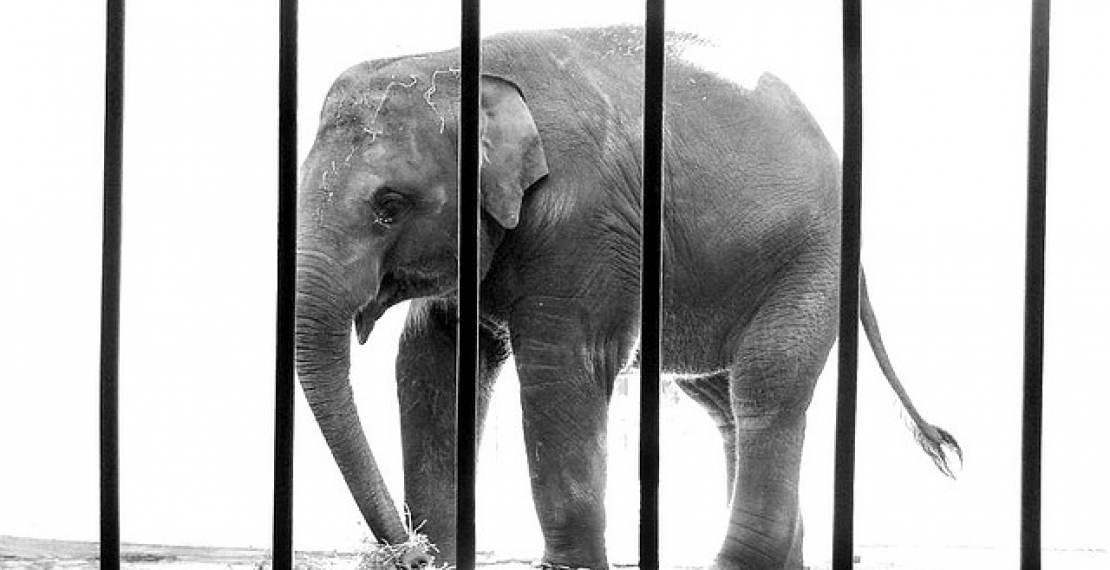 More wild animals condemned to imprisonment