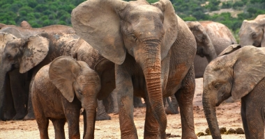 Court finds Tuli elephant owner guilty